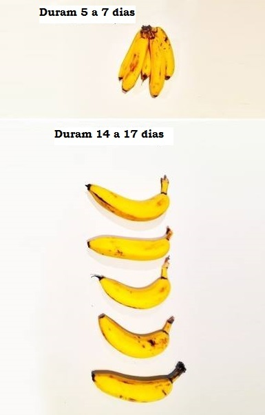 Guardar bananas